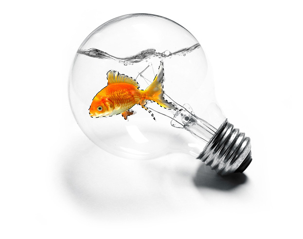 Light bulb fish tank
